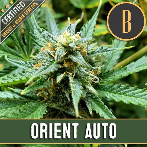ORIENT AUTO PLANT
